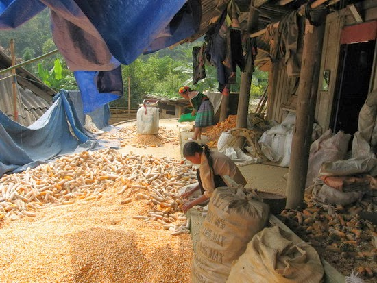 Rươu Ngô Na Hang Tuyên Quang 5