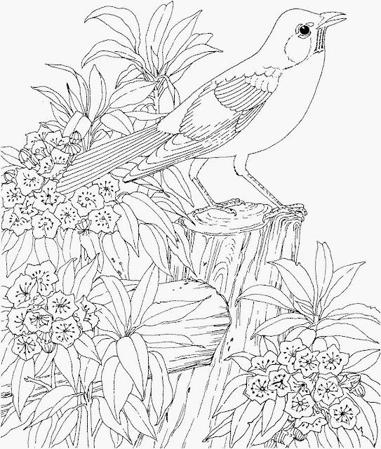 Gambar mewarna - Burung di taman