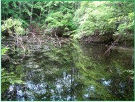 Sloan  Gorge Preserve