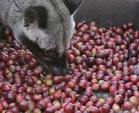 Hukum mengkonsumsi Kopi luwak