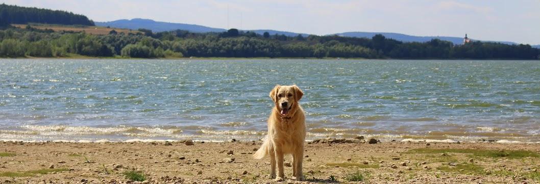 Złoty Pies