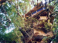Rumah Pohon Paling Unik di Dunia
