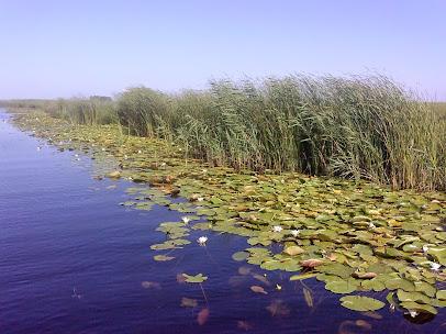 Delta Dunării - canalul Bărbosu