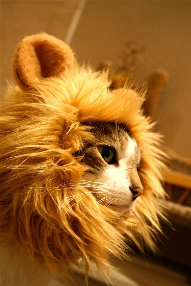 lion mane hat for cats