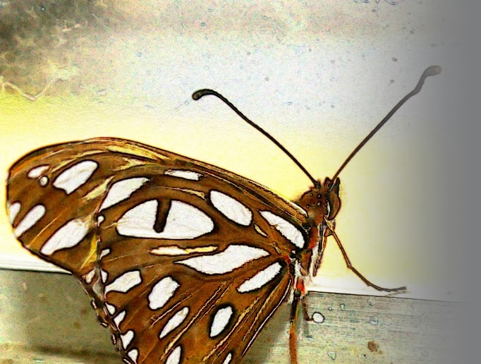 Butterfly at window