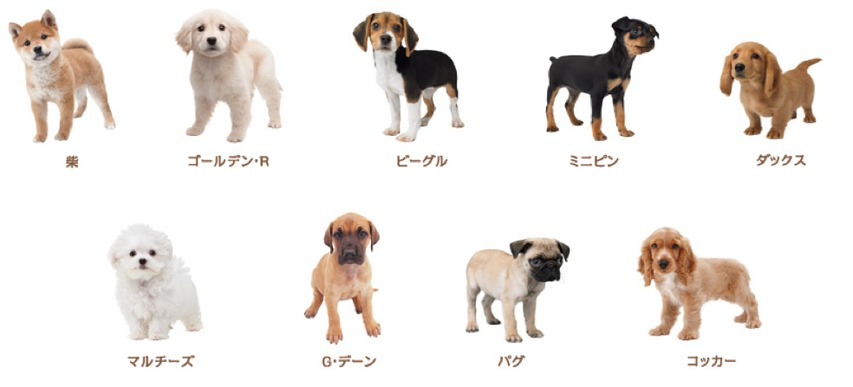 Nintendogs Toy Poodle Dog Types