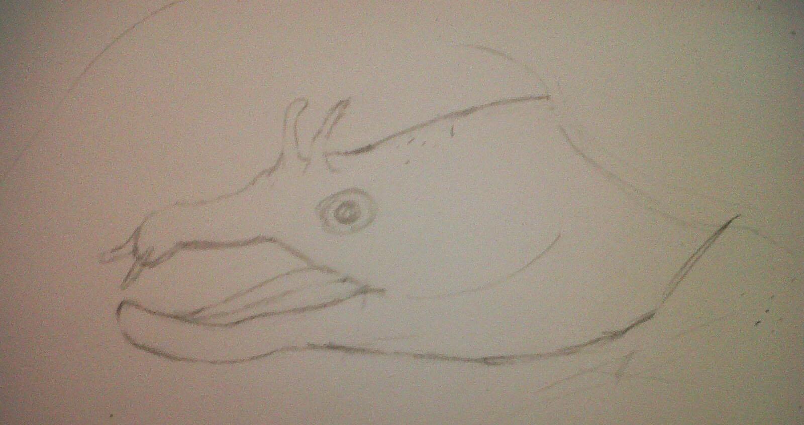 Caroline Wills: Progress Update: Moray Eel