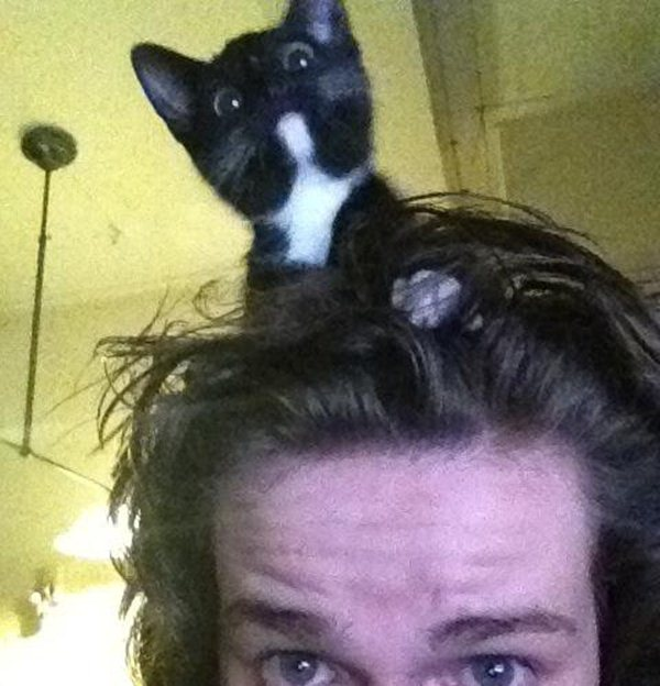 funny cat pictures, cat in the head