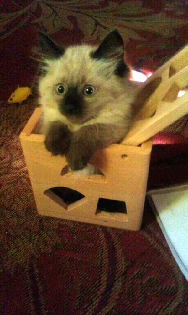 funny cat pictures, cute kitten on box
