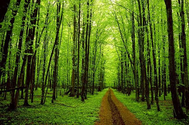 http://www.woking.gov.uk/planning/trees/treenfpol