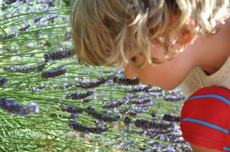 Smelling lavender, french camping