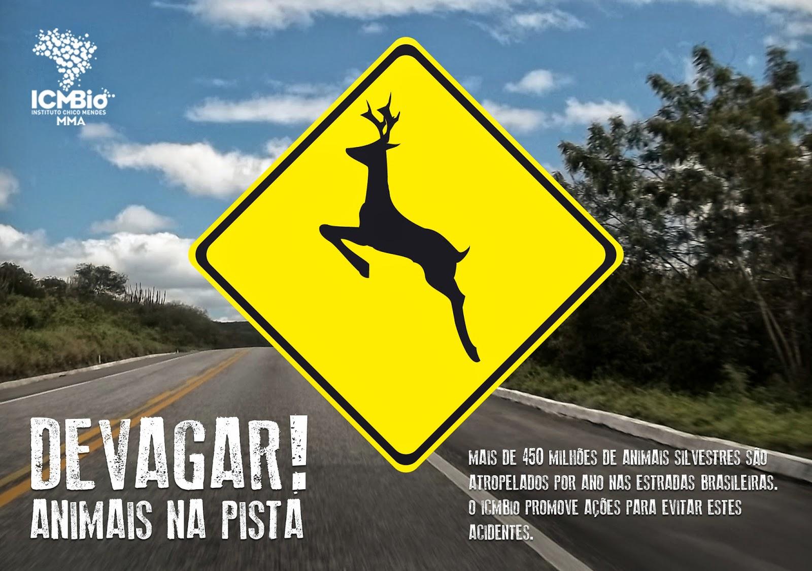 Animais silvestres mortos nas estradas brasileiras