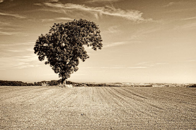 Tree near Farnley Tyas