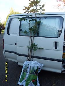 Autamme tarvittaessa taimien istuttamisessa ja siirroissa joko autollanne tai vuokra-auton avulla