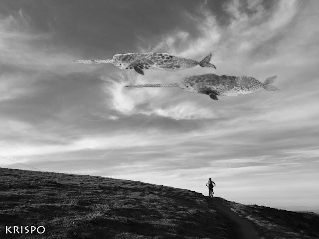 dos narvales sobrevolando el cielo