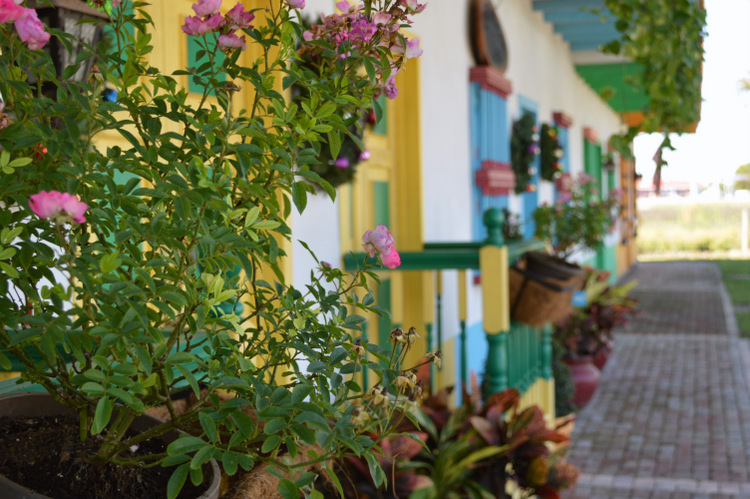 flowers in a mexican puebla village in homestead florida