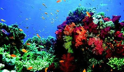 coral reef destruction essay