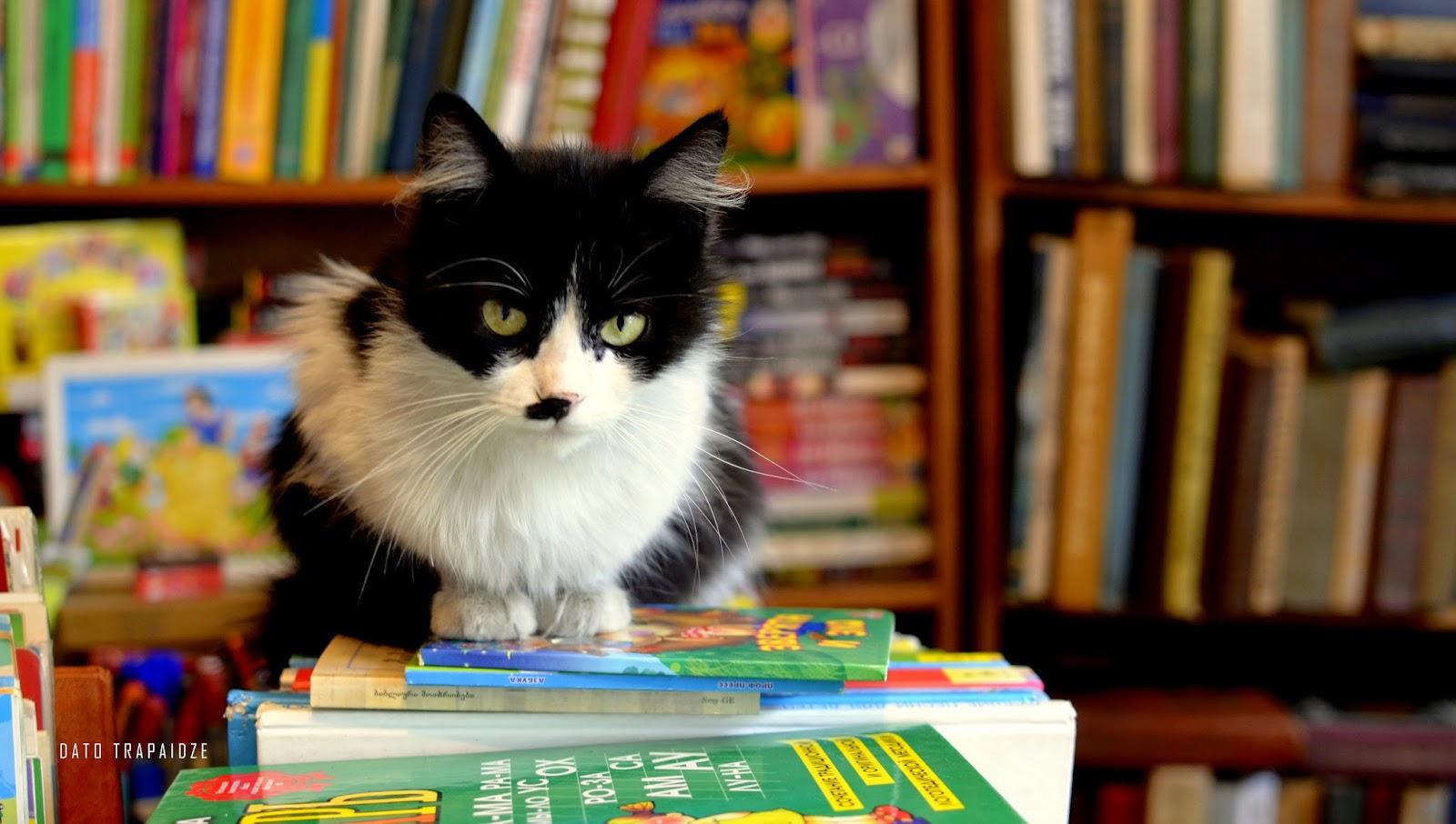 წიგნები ბათუმში და მეცნიერი კატა