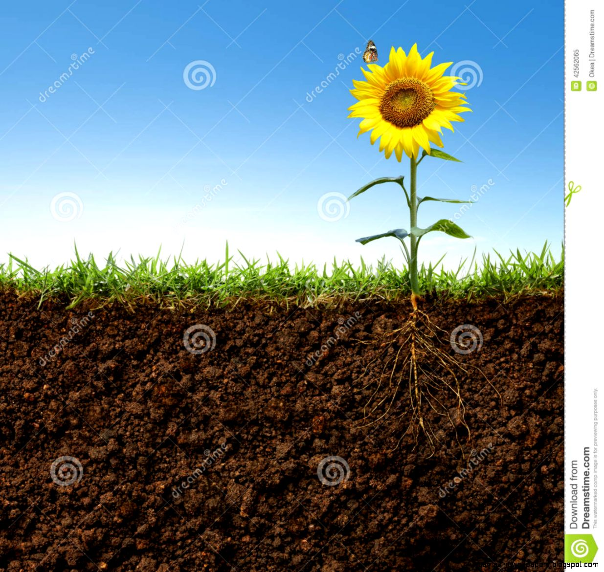 Sunflower With Roots Underground Stock Vector Image 63733978