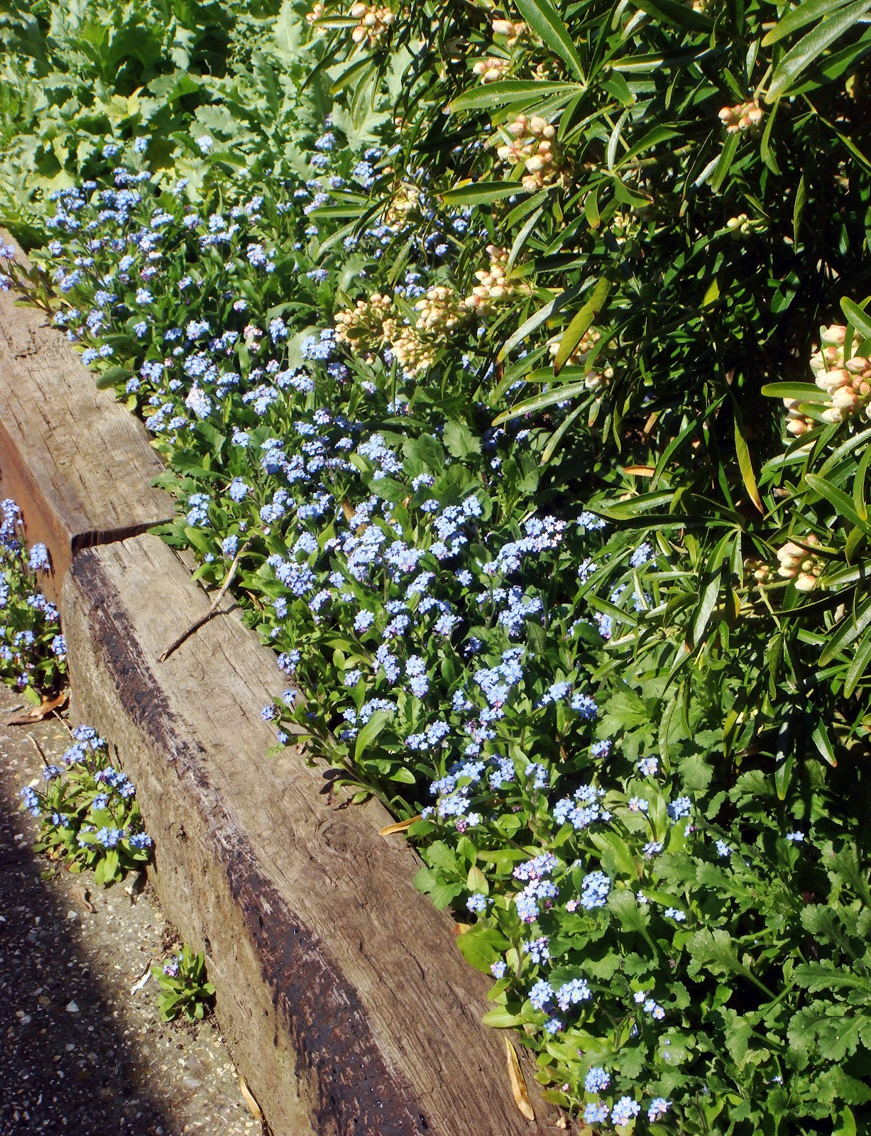 Hove daily photo forget me nots for Wibbo me