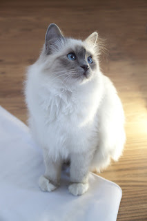 See more most famous cat breeds