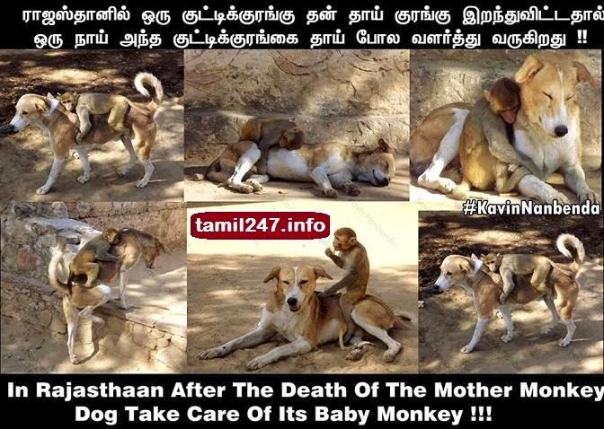 Dog Take Care Of Its Baby Monkey, tamil news