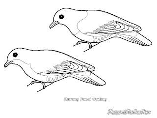 Mewarnai Gambar Burung Punai Gading