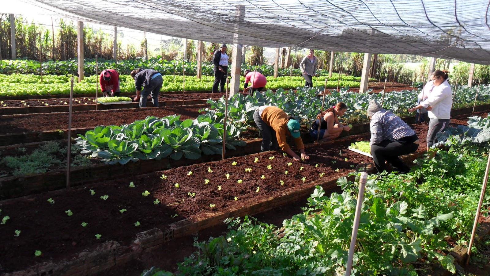 Paraná: Projeto Horta Comunitária: promovendo bem estar social #769A31 1600 900