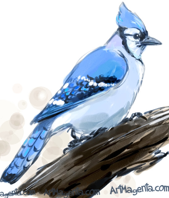 Blue Jay sketch painting. Bird art drawing by illustrator Artmagenta