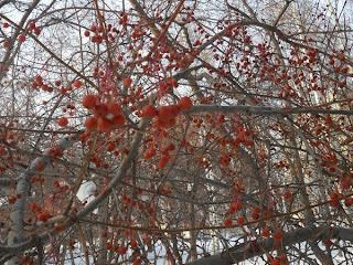 Дикая яблонька зимой