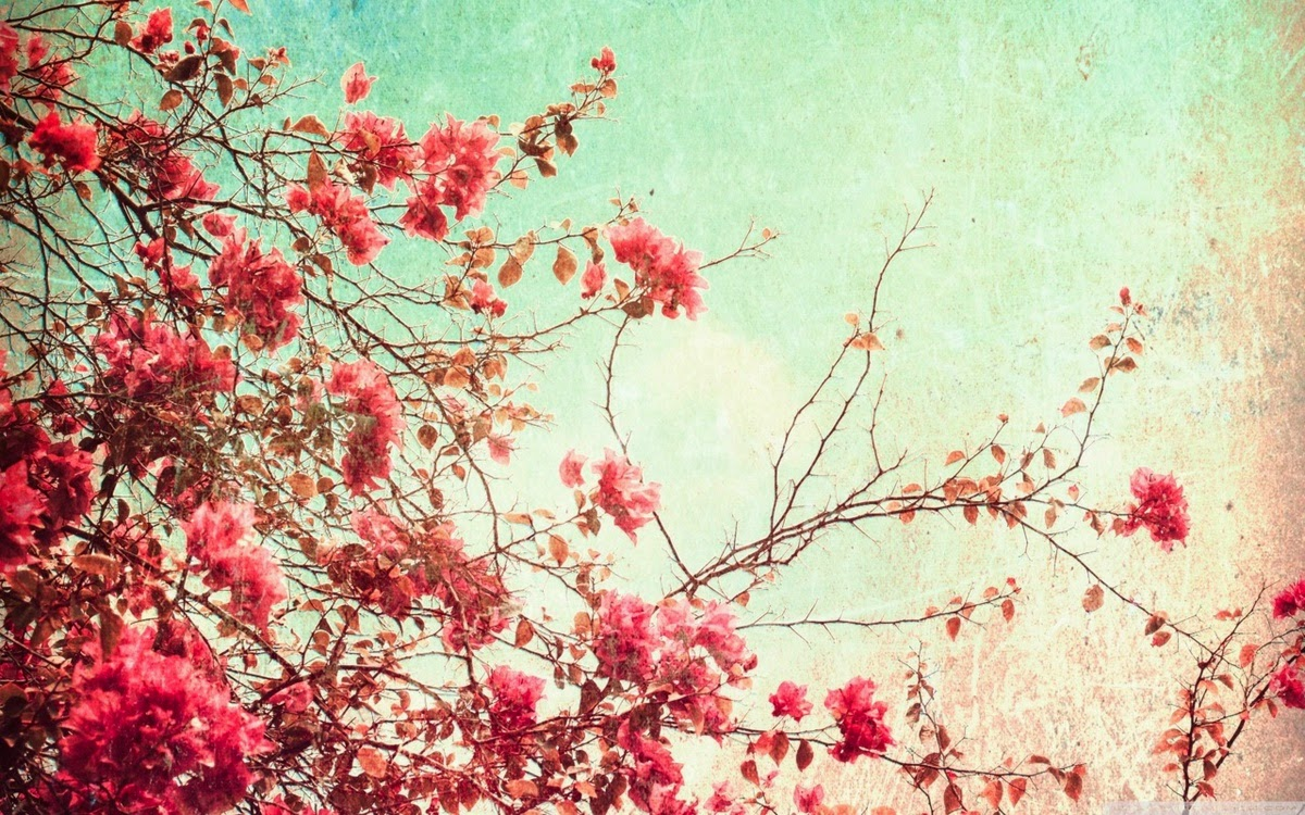 Wallpapers Million Free Visitors: Flower Tumblr