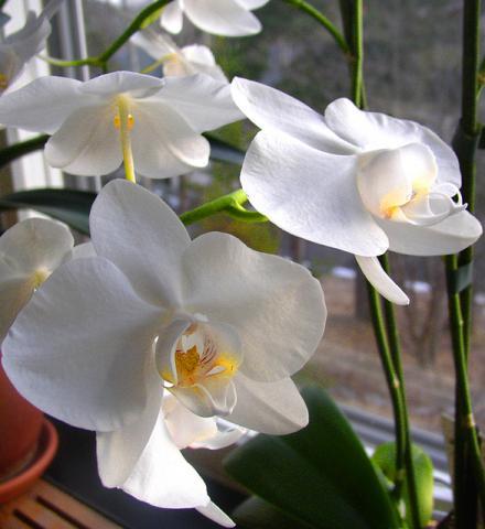 el jardinero plantas y flores c mo cuidar las orqu deas