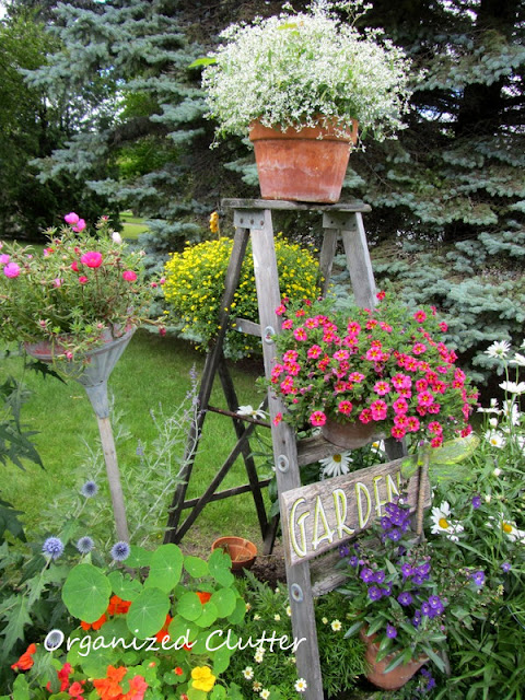 Garden Step Ladder