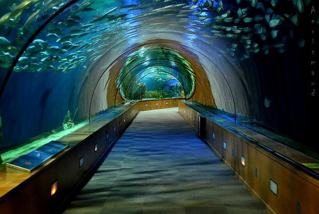 aquarium in the l oceanografic park of valencia spain arhguz
