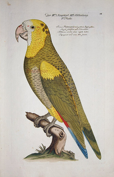 autobiography of caged parrot essay