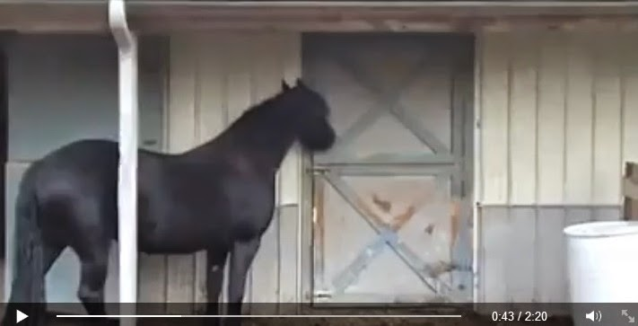 http://funkidos.com/videos-collection/amazing-videos/prison-break-horse