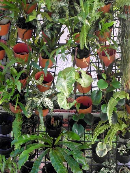 Jardin vertical cuidar de tus plantas es for El jardin escondido