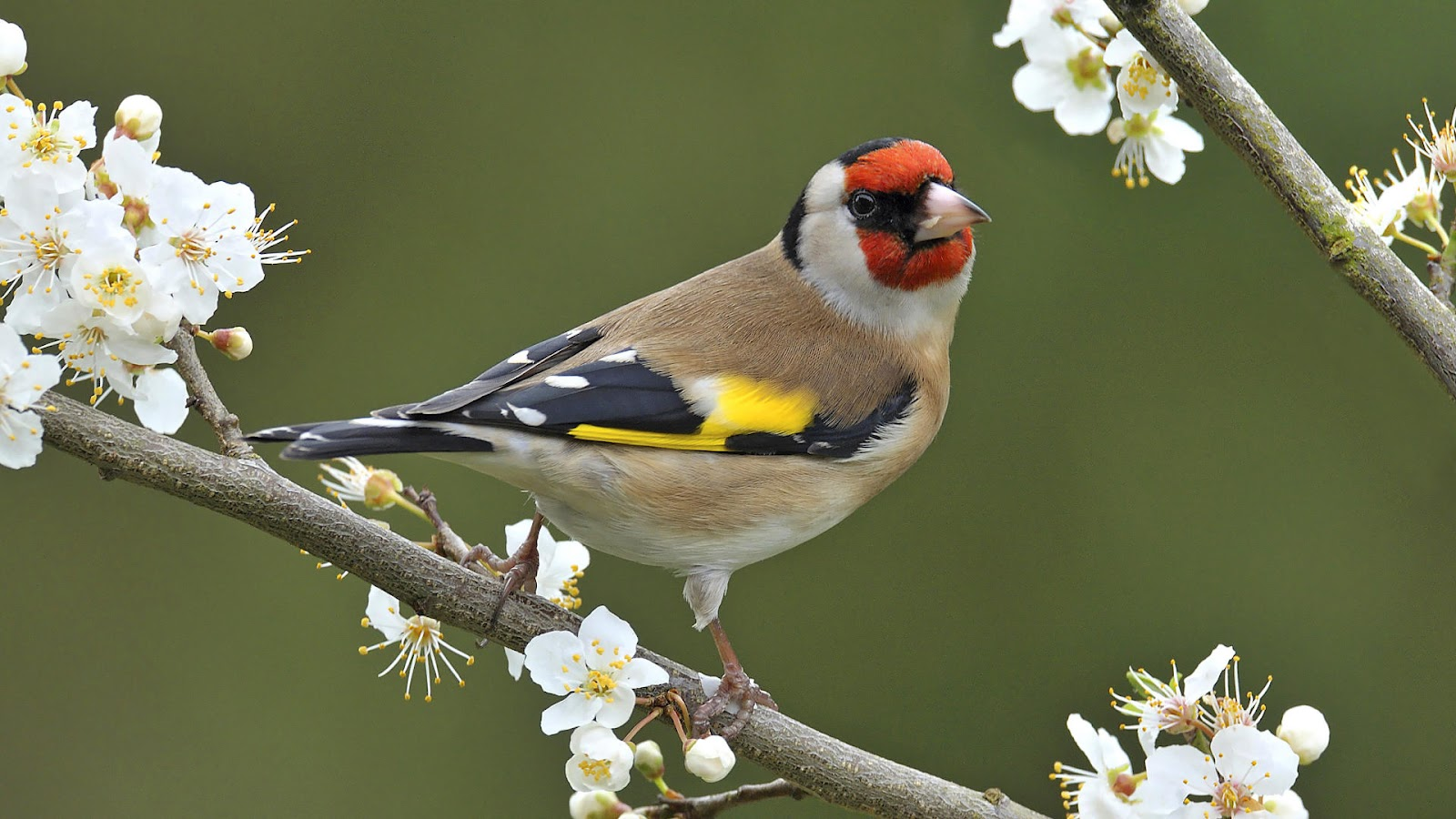 bird sitting on a branch wallpaper hd animals wallpapers