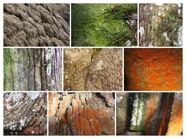 Projet poster sur les grès de Fontainebleau, (C) 2015 Greg Clouzeau