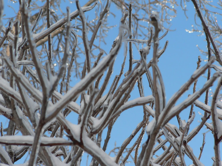 ice on the sumac