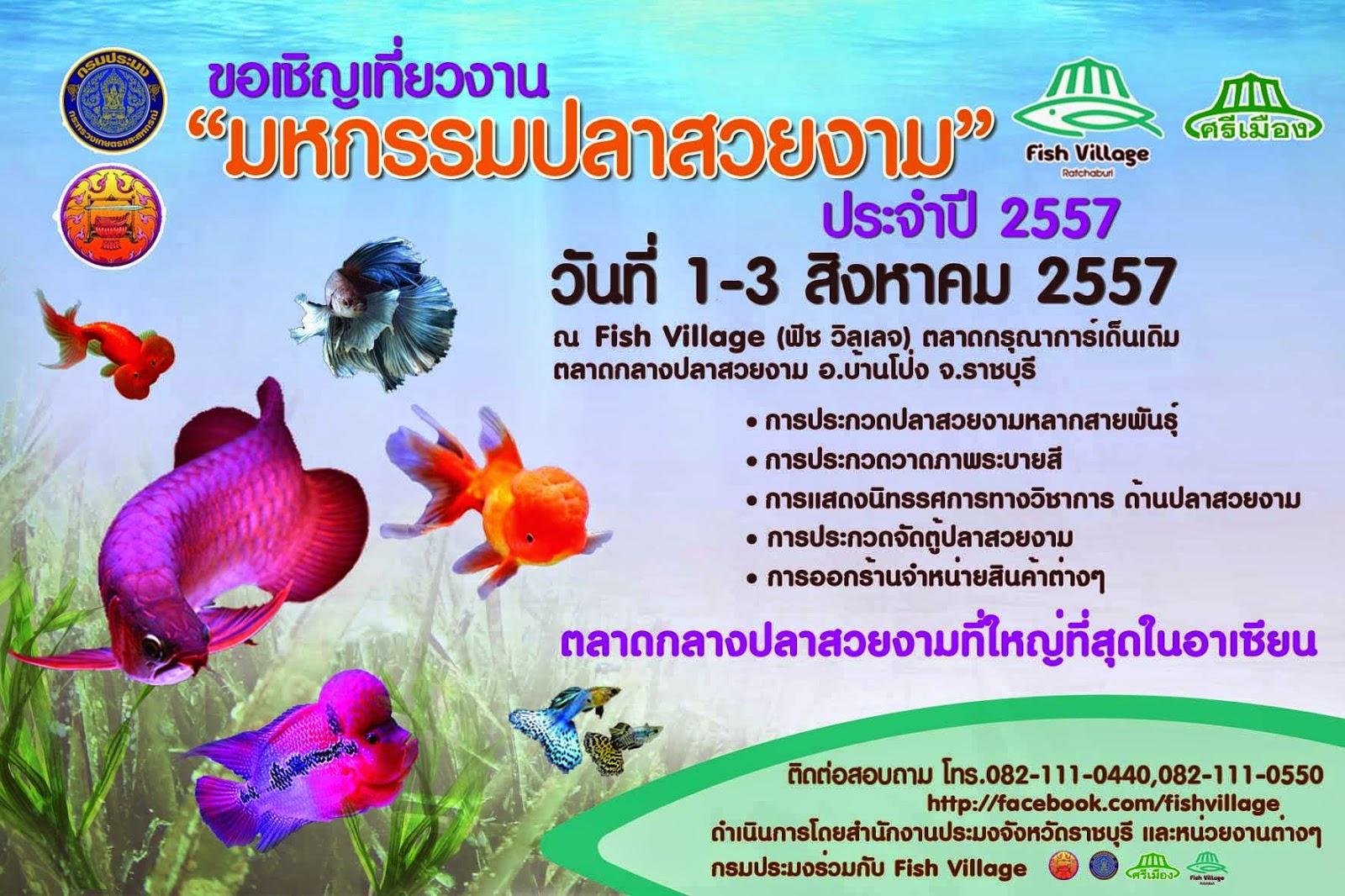 มหกรรมปลาสวยงาม 2557 บ้านโป่ง ราชบุรี ประกวดปลาสวยงาม