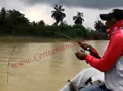 Gila Mancing Double Strike Ikan Patin Besar Putus Satu