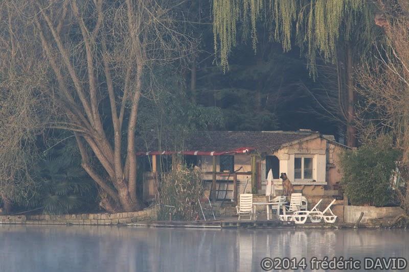matin lac brume chien étang Vert-le-Petit Essonne