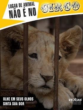 Lugar de animal não é no circo