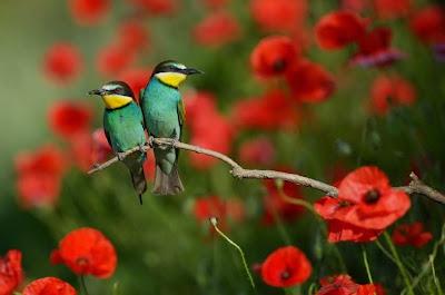 фотография радослав цветков