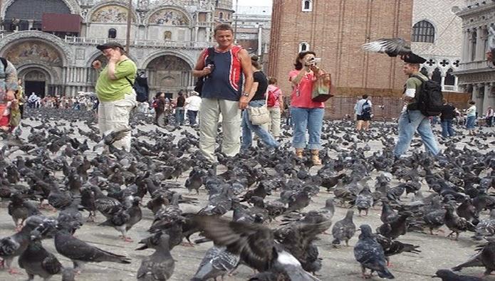 jangan memberi makan burung merpati di venesia, pigeon at venesia, venezia's pigeon