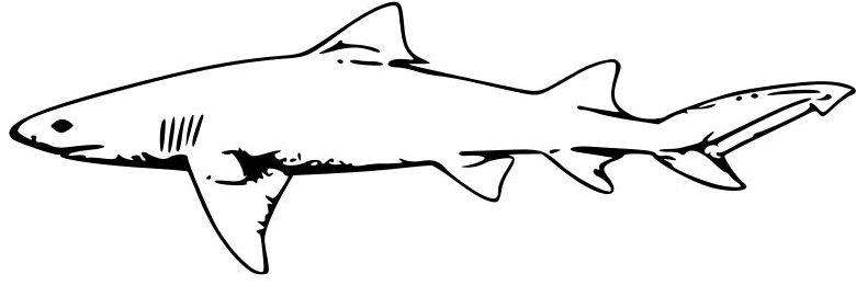 Tiburones para colorear reales - Imagui