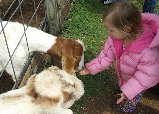 Sierra feeding the goats and Yoder's Country Market