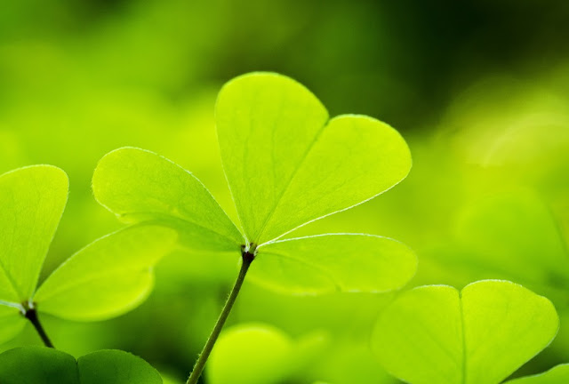 St. Patrick's Day Trivia You Maybe Did or Did Not Know