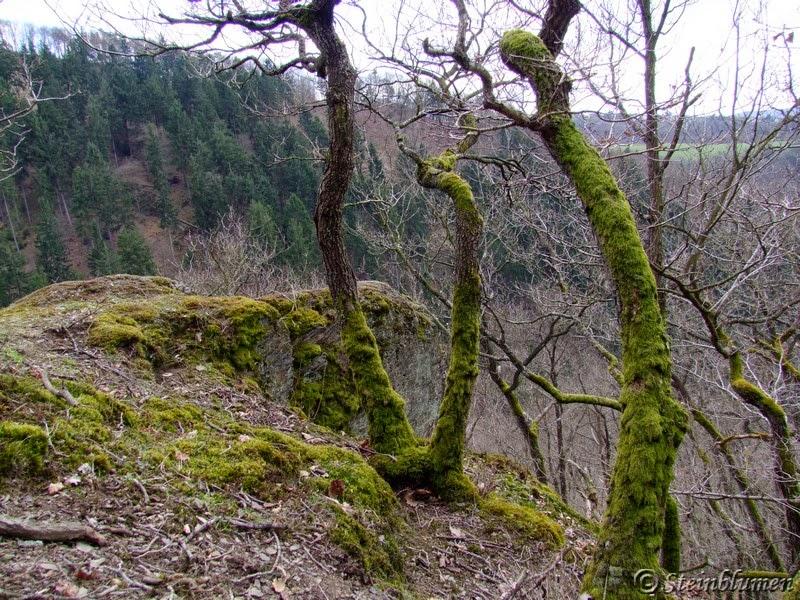 Bäume auf Felsnase
